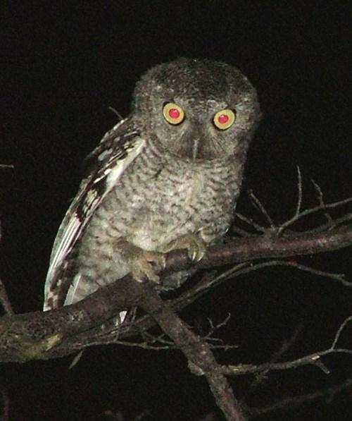 night_owl1