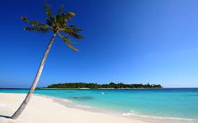 Island palm tree