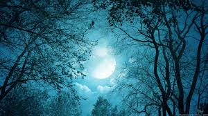 Forest Blue moonlight
